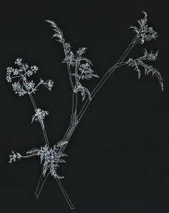 cowparsleya4-dl-moo