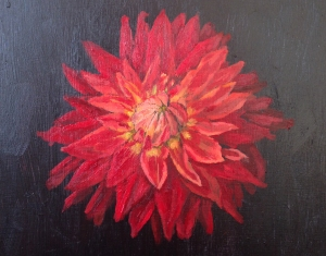dahlia-single-red-pp-moo
