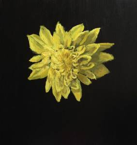 dahlia-single-yellow-_2-ppw