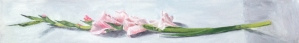 gladioli, pale pink 2013