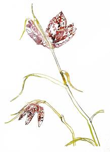 snakeshead-fritillary-watercolourphotoshop_w