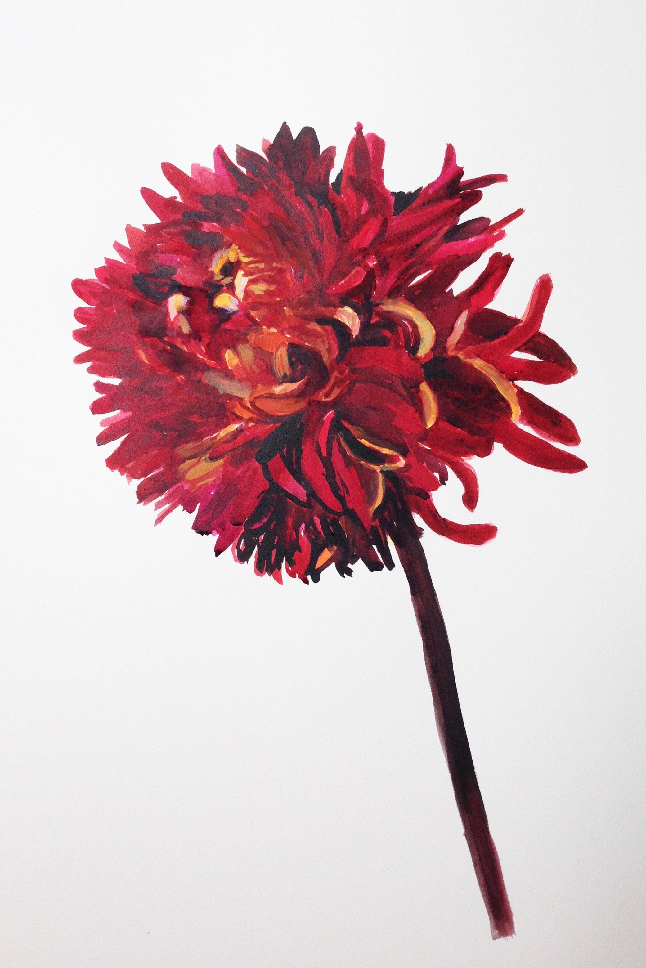 red-chrysanthemumW