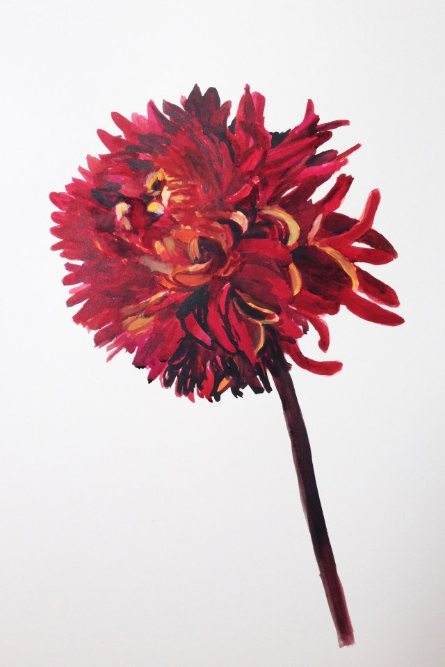 red-chrysanthemumW